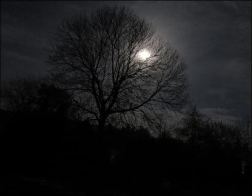 Der Supermond in Thalheim leuchtet durch die Äste der Eiche.